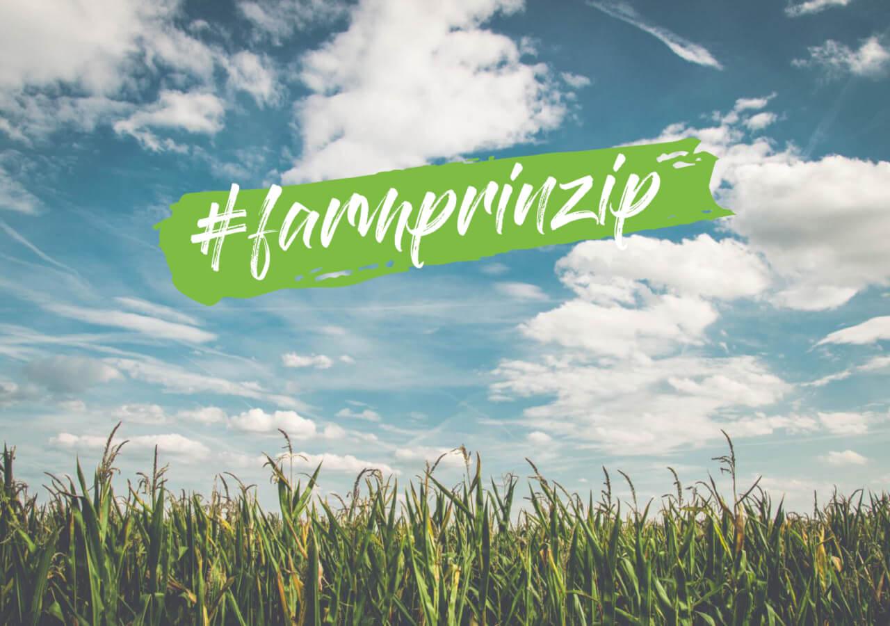 #farmprinzip – Maisfeld